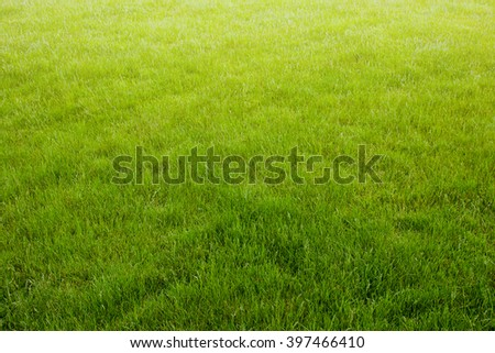 Background of a green grass with sunlight. Green grass natural texture - stock photo