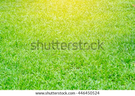 Background of a green grass with sunrise. Green grass texture. - stock photo