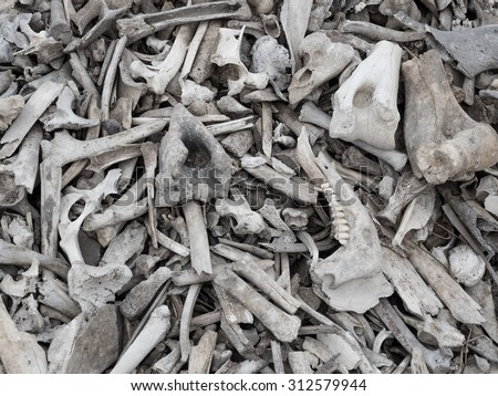 Pile Of Bones Stock Images, Royalty-Free Images & Vectors ...