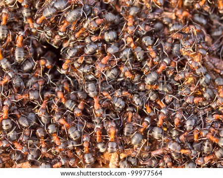 Background of a Red Ant colony (Formica rufa) - stock photo
