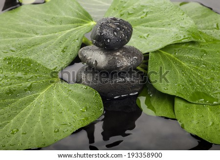 Background of a spa with stones and a sprig of green leaves.  - stock photo