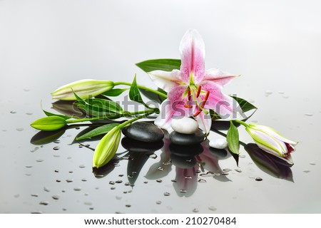 background of a spa with stones, and a sprig of lily flower - stock photo