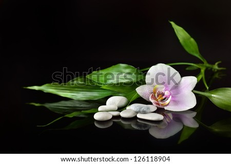 background of a spa with stones, orchid flower and a sprig of green bamboo - stock photo