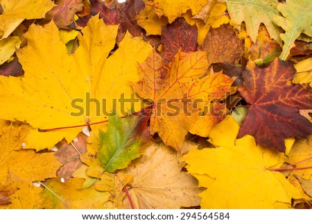 background of autumn leaves