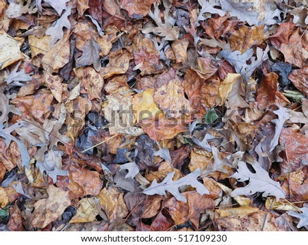 Background of Autumn Leaves From Above