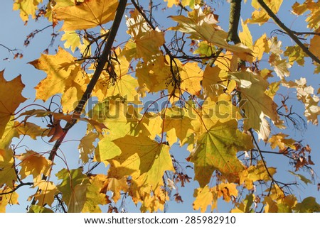 background of autumn leaves in sunlight - stock photo