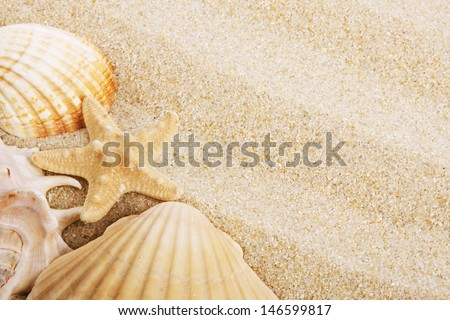background of beach sand and shells