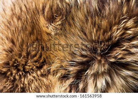 Background of beautiful fox fur - stock photo