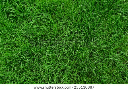 Background of beautiful green grass