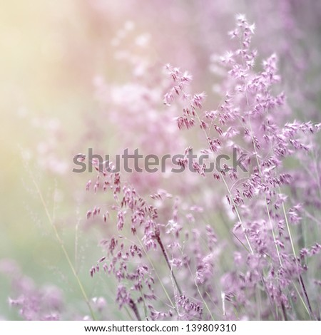 Background of beautiful lavender color flower field, fresh gentle purple wildflowers in sunny day, soft focus, summer time season - stock photo