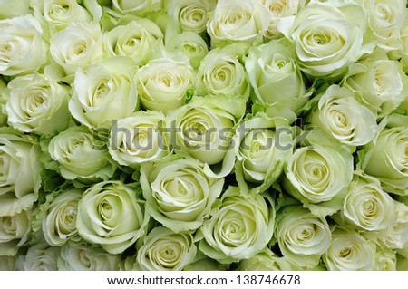 Background of beautiful white roses