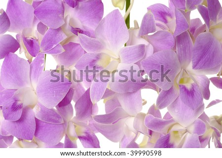 Background of blossom pink orchid