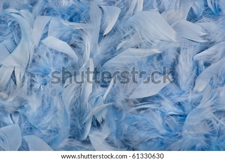 Background of blue feathers of bird - stock photo
