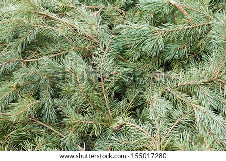 Background of branches and needles from a pine tree - stock photo