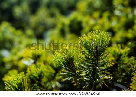 Background of branches of young trees close-up in flowerbed in summer city park. - stock photo