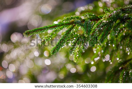 Background of Christmas tree branches. - stock photo