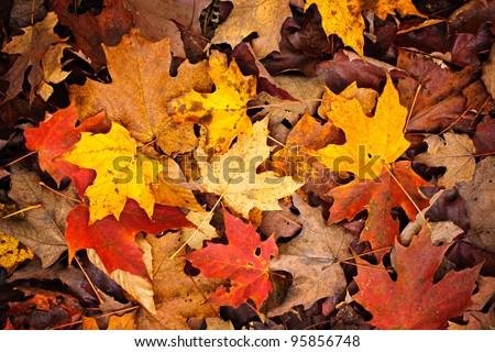 Background of colorful autumn leaves on forest floor - stock photo