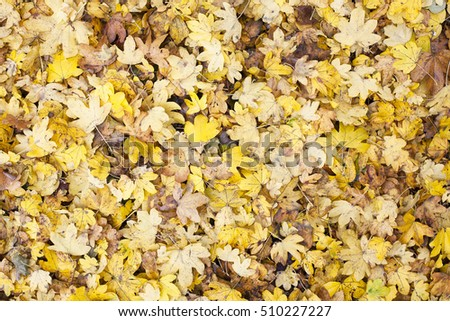 Background of colorful autumn leaves on the ground.