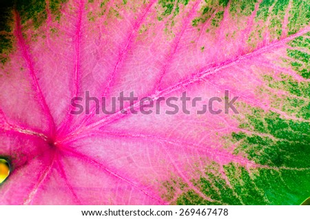 Background of colorful leaves - stock photo