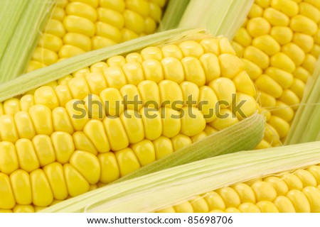 background of corn on the cob  on a white background