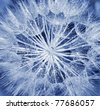 Background of dandelion flower, extreme closeup, abstract blue nature background - stock photo