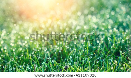 Grassy knoll- Light and tranquil nature textures with fresh bright ...
