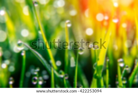 background of dew drops on bright green grass with sun beam. Bright natural bokeh. Soft focus. Abstract creative background . blurred. close up. - stock photo