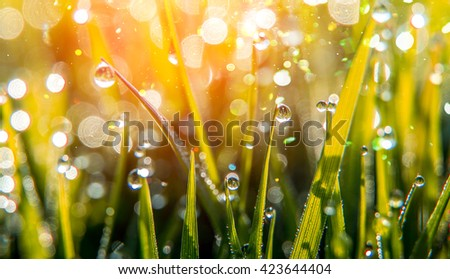background of dew drops on bright green grass with sun beam. Bright natural bokeh. Soft focus. Abstract creative background . small depth of field. close up. - stock photo