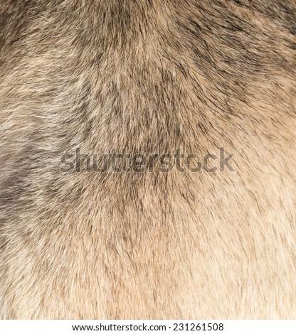background of dog hair - stock photo