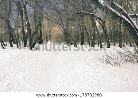Background of dusk  houses and snowy trees grove in russian park  Night landscape in city Path in a winter deep forest - trees covered with snow - stock photo