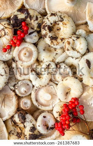 Background of edible mushrooms collected in the forest