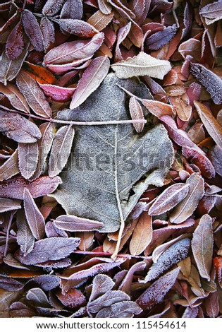 Background of fall dead leaves - stock photo