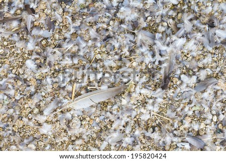 Background of feces and feathers of pigeons, which are available everywhere  - stock photo