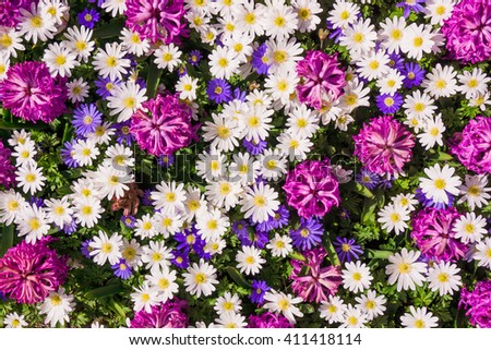 background of flowers. Beautiful flowers - stock photo