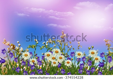 Background of flowers. Chamomile field. wildflowers daisies and bluebells - stock photo