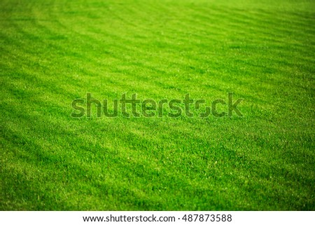 Background of fresh green grass in sunshine. Straight rows of grass after lawn mower.