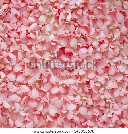 Background of fresh pink flower petals - stock photo