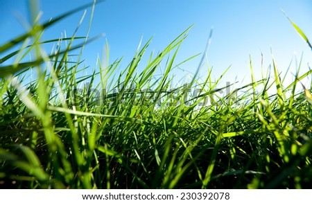 Background of freshly grown grass, shallow depht of field. - stock photo