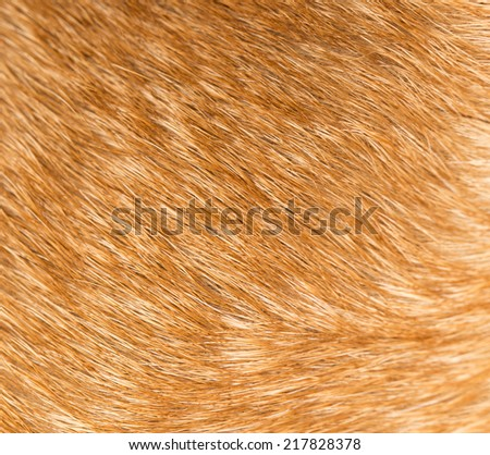 background of fur - stock photo