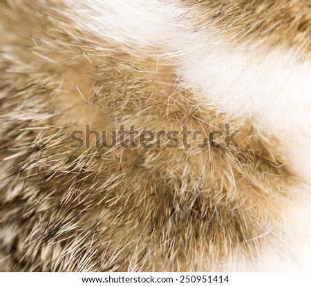 background of fur animal - stock photo