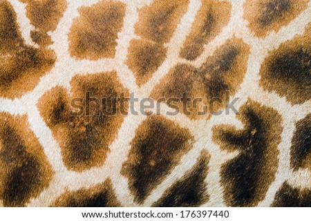 Background of furry giraffe skin with light and dark brown spots - stock photo