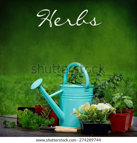 Background of Garden watering can sitting amidst herbs and flowers with text at the top, Herbs - stock photo