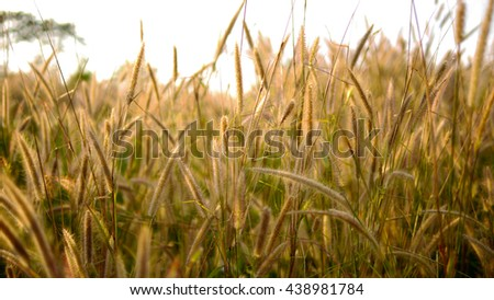 Background of grass  soft focus and blur. - stock photo