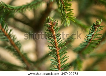 Background of green artificial Christmas tree branches. - stock photo