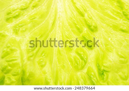 background of green leaves - stock photo