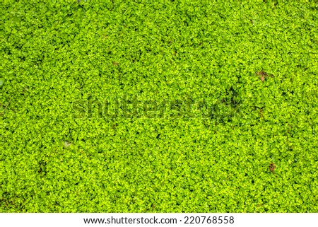 Background of green plants - stock photo