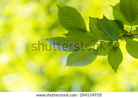 Background of leaves a sunny day in spring and summer, ecology concept.