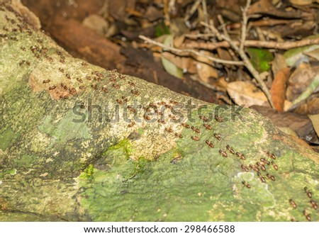 Background of marching termites in the wood - stock photo