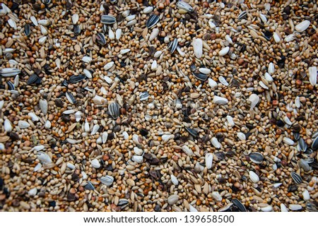 Background of mixed seeds, grain, corn and nuts. Pet food for birds. - stock photo