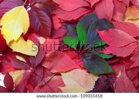 Background of multicolor autumn leaves - stock photo